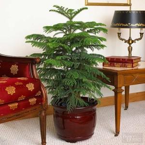 Grow plants indoors